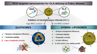 Impact of Chemical Composition on the Nanostructure and Biological Activity of α-Galactosidase-Loaded Nanovesicles for Fabry Disease Treatment
