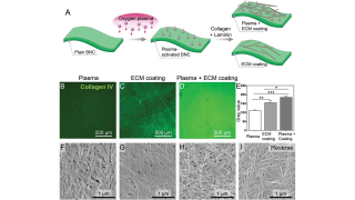 Limbal Stem Cells on Bacterial Nanocellulose Carriers for Ocular Surface Regeneration